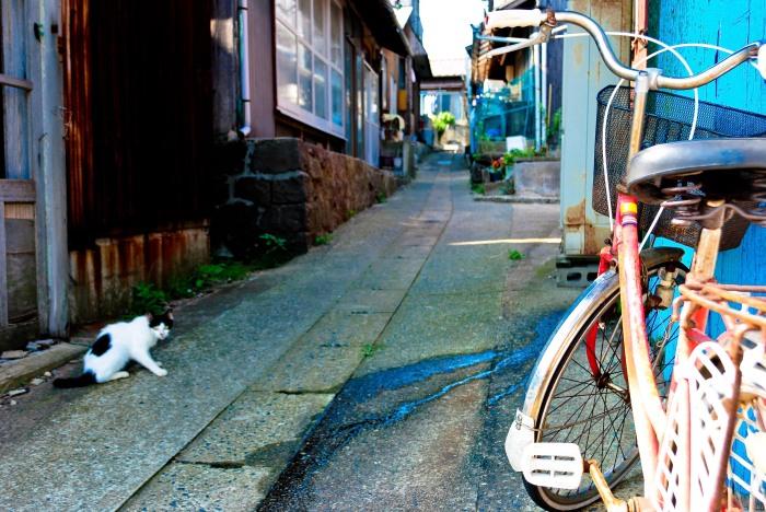 catandbike