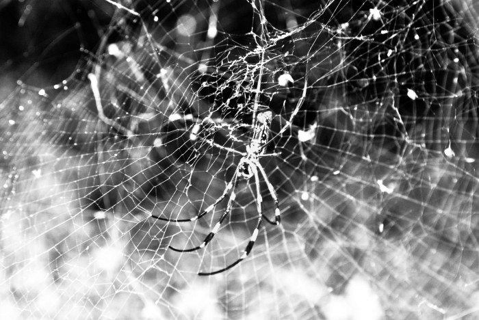 spiderinitsweb