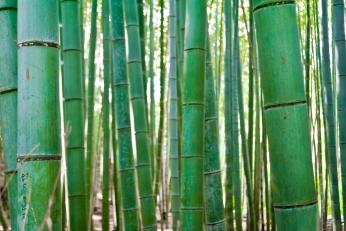 bamboo-grove-kyoto