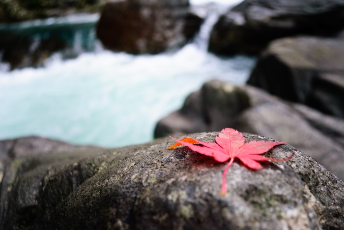autumnmapleleaf