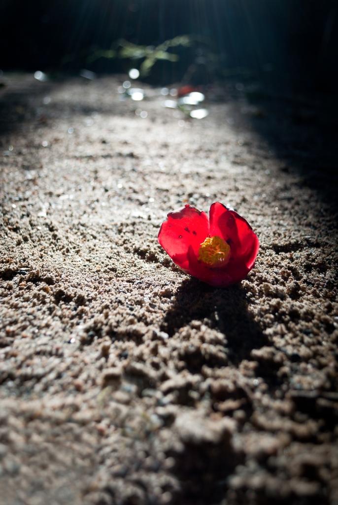 camelliaflower