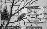 birdiniceland