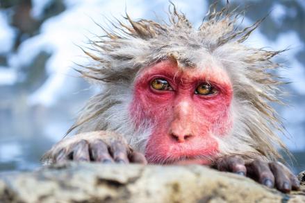jigokudano-snow-monkeys