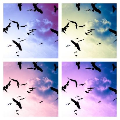 pop-art-birds