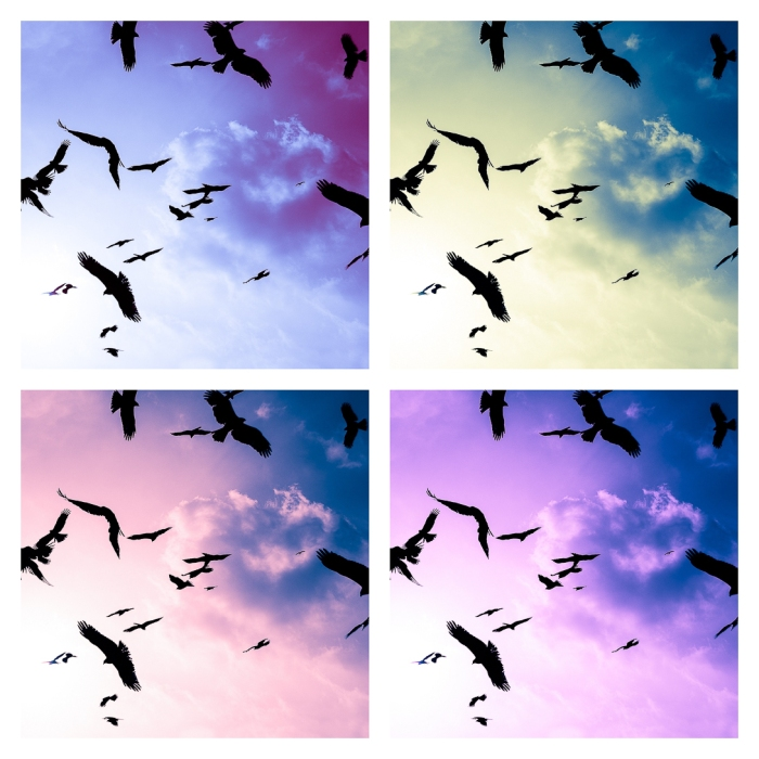 pop-art-birds