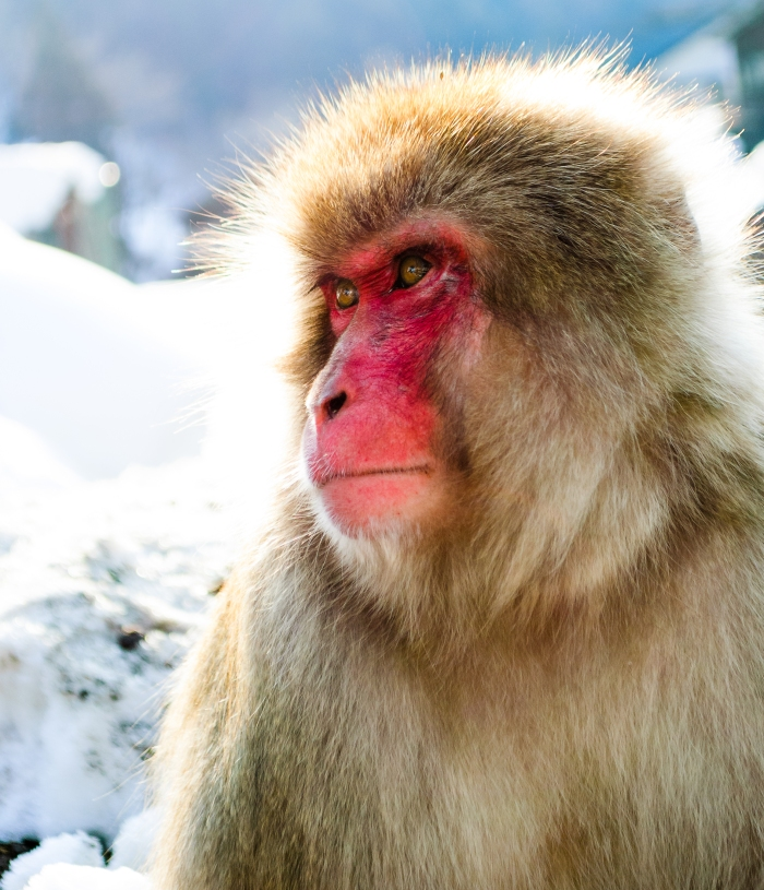 monkey-moments