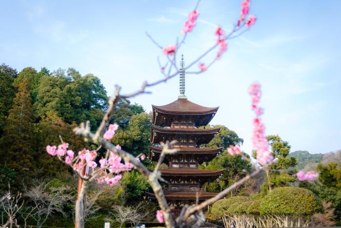 cherry-pagoda
