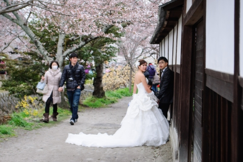 cherry-blossoms-kyoto-wedding