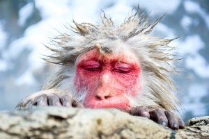 monkey-moments-japanese-snow-monkey