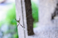 spider-and-its-web