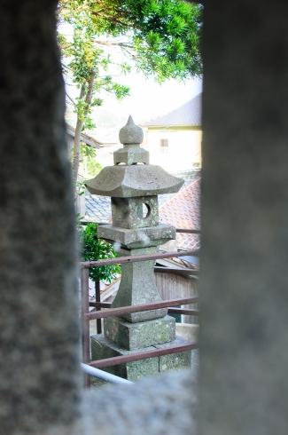spider-tori-gate