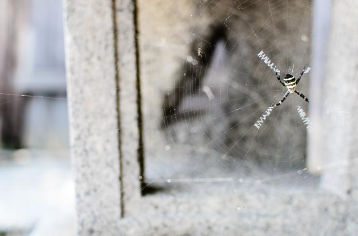 spiders-web-japan