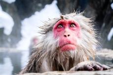 snow-monkey-japan