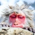 monkey-instagram