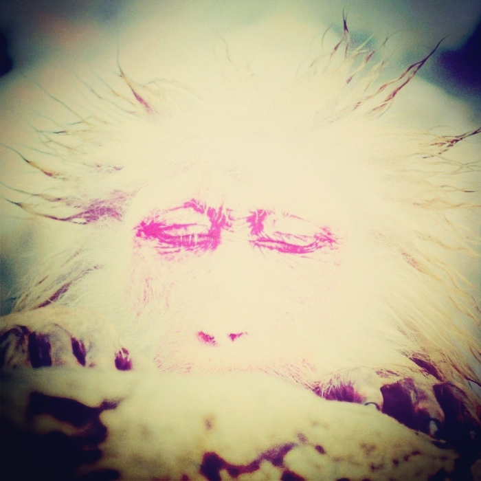 monkey-instagram
