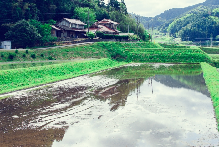 rice-planting-japan