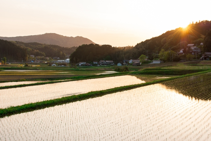 japan-rice-field-sunset