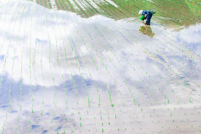 japan-rice-planting