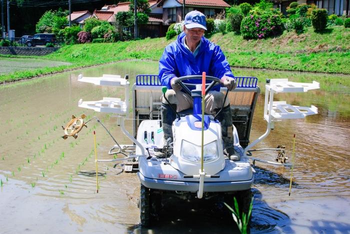 rice-plating-in-japan