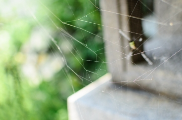 a-spiders-and-it's-web