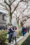 cherry-blossoms-kyoto-japan