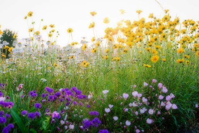 japanese-flowers