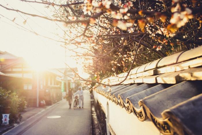 cherry-blossoms-japan