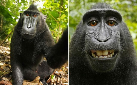monkey-620_1937620c