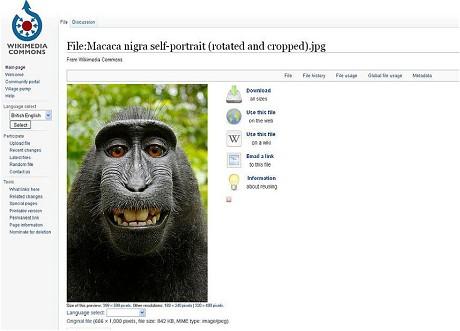 Monkey-selfie-_2998464c