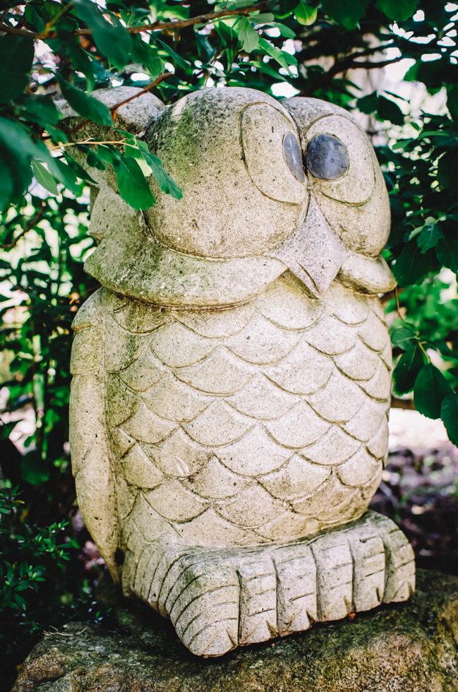 japanese-owl