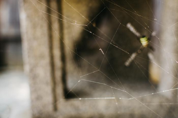japanese-spider