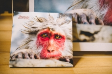 monkey-album-art-work-3