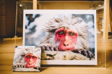 monkey-album-art-work