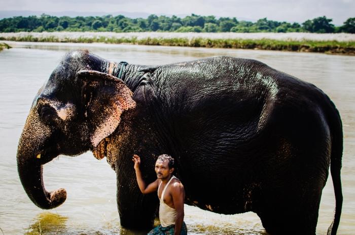 elephant-nepal