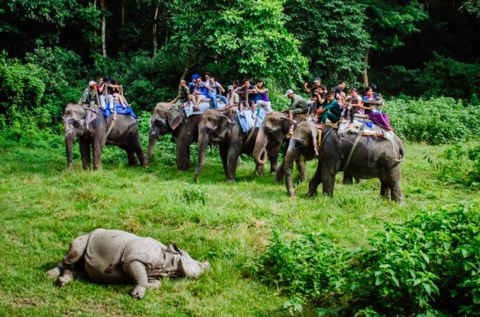 nepal-rhino